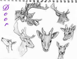Deer headshots by LuckyIrishEyes