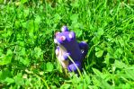 Cold porcelain Rattata by CraftDragons