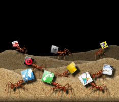 ANTS!!! by jester2508