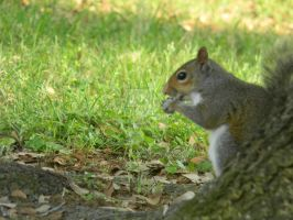 Squirrel and His Nut by HarleyQuinn2012
