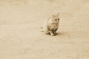 Street cat by Emmatyan