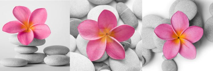 Flower and Pebble Tryptich by Spanishalex