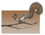 CA art: Gray Squirrel by Nyctra