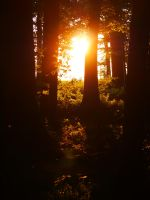 sunrise in wood by MadMike27