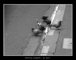 Morning Pigeons by aalf