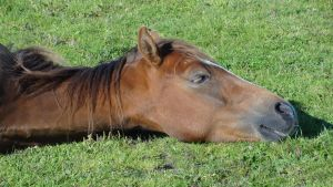 Lying Horses by Horselover60-Stock