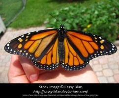 Monarch Stock 2 by Cassy-Blue