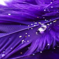 This Is Purple by Hitomii