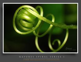 Spiral-Series1 by dhead