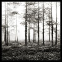 Dreamy Forest by hquer