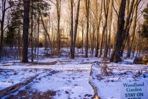 UNRESTRICTED Golden Woods background stock by little-spacey