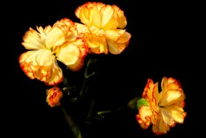 G92 8840 Carnation Trio by Partists