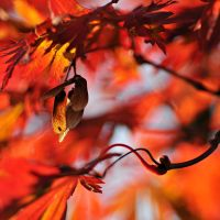 blazing autumn 2 by MorkOrk