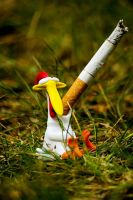 Chicken  Smoking by BenKodjak