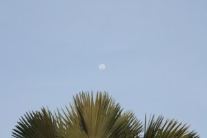 Moon in the Day by AEC101