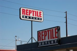 Reptile Outlet by markhosmer