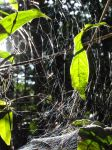 The brightness of the spider threads by DannyFCool