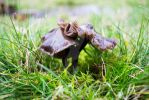 Frilly Fungus by thedustyphoenix
