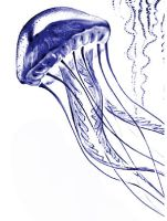Jellyfish by lesoleilfonce