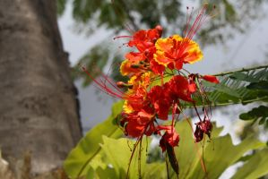 Red flower 7015 by fa-stock