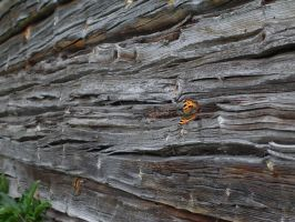 Butterfly on old wall by Garbuend