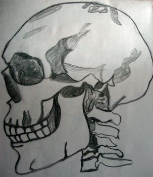Skull by Bladyle