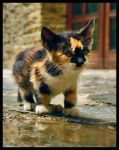 The Little Meow by arsovski