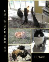 Cat stock pack by 3corpses-in-A-casket