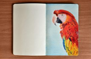 Parrot Drawing by Rollingboxes