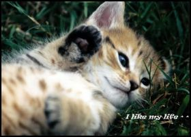 My baby cat by Ilora24