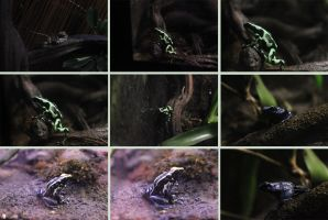 Frogs 1 by Tasastock