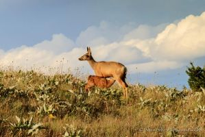 Whitetail Deer and Fawn 2 by Mac-Wiz