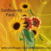 5 Sunflowers Pack by UmbraDeNoapte-Stock