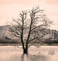 Tree in Water by Hoeilund