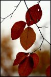 Ready to Fall by George---Kirk