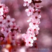 Spring: Pure Pink IV by Moon-Willow