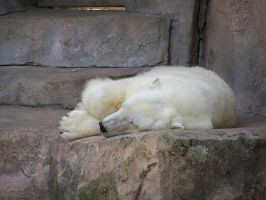 Polar Bear Stock4 by Gnewi-Stock