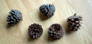 Pinecones Stock by Snowenne