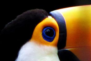 the eye of the toucan by frei76