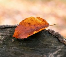 The last leaf by valiunic