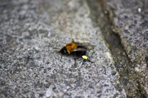 bomble bee a by speed-demon