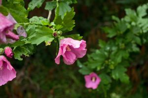 2015-07-03 Nature 66 by skydancer-stock