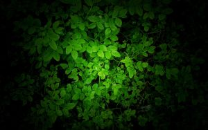 Green wallpaper by Mikkoliini