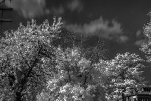 Infrared 2 by kelmeloo