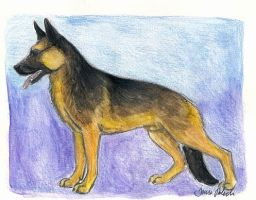 German shepherd by novablue