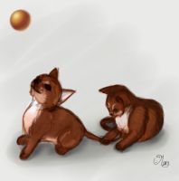 abyssinian kitten - Day 1 :) by mary3m