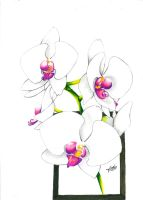 Japanese Orchids by melloteddy