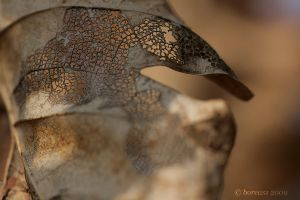 Texture of a leaf by boreasz