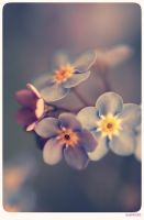 Forget me not - 12 by anjali