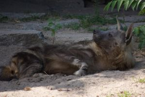 brown hyena by bookscorpion